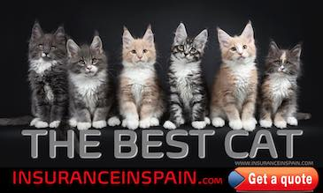A row of assorted cats sitting looking at the best cat insurance in Spain