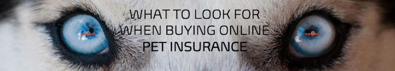 What to look for when buying pet insurance online