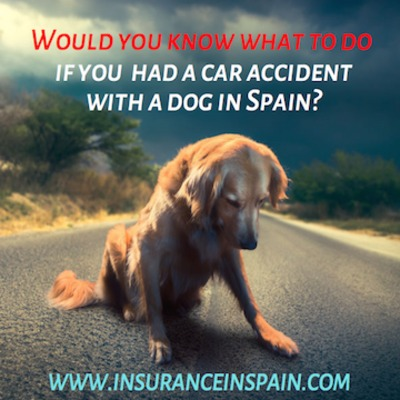 What to do in the event of a car accident with a dog in Spain ?Dogs | What to do in the event of a car accident with a dog in Spain ?